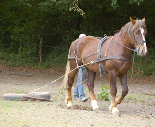 cheval de trait debourre
